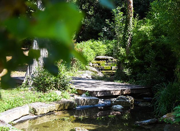 Bassin et jardin japonais